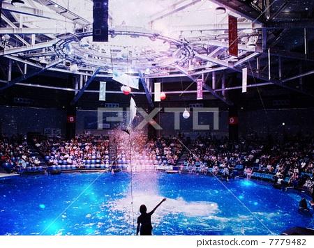 八景岛海洋乐园 海豚表演 水族馆