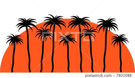 棕榈树 矢量图 矢量