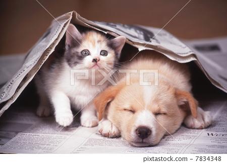 图库照片: 小猫 小狗 动物
