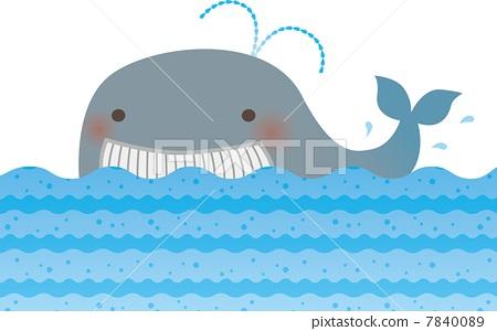 鲸鱼 海洋生物 可爱