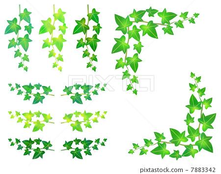 树叶 叶子 藤蔓