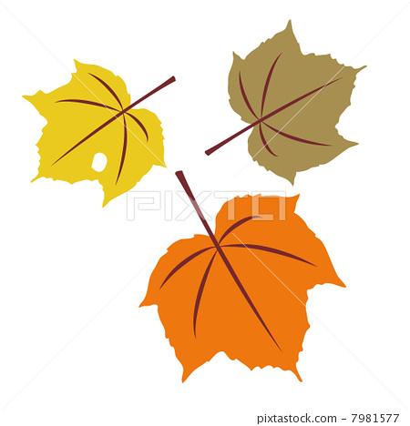 的树叶简笔画图片下载 枫树的树叶简笔画打包下