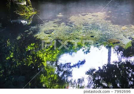 照片素材(图片): 河流源头 水源 水资源