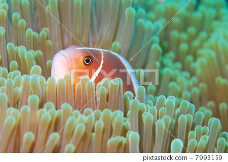 画海里面的动物