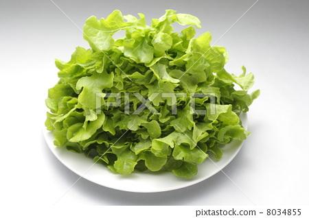 图库照片: 生吃蔬菜 叶菜类 生菜图片