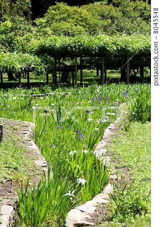 照片素材(图片): 日本园林 日式花园 日本庭院