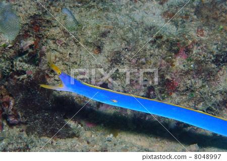 海鳝 热带海洋 胡子