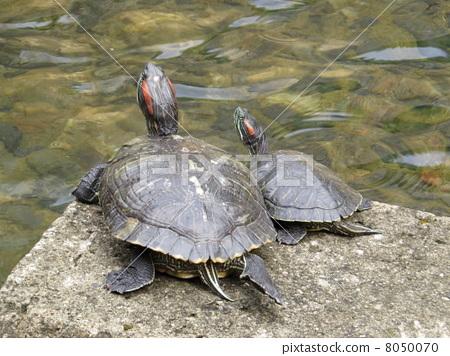 乌龟 晒太阳 父母和小孩