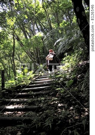 散步 在树林里的治疗性散步