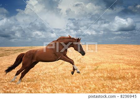 壁纸 动物 马 骑马 450_318