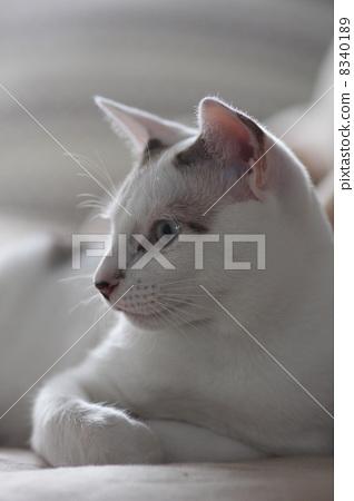 猫 外形 侧面图