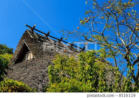 日式房屋 柿子树 盖屋顶