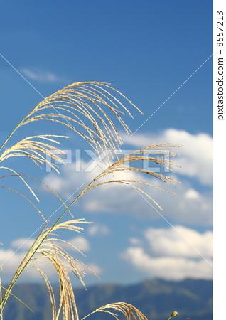 照片 姿势_表情_动作 表情 可爱 susuki和秋天的天空  *pixta限定素材