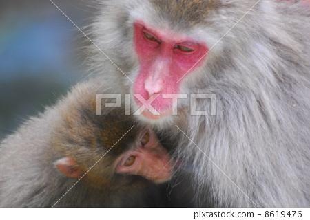 猴子 父母和小孩 动物