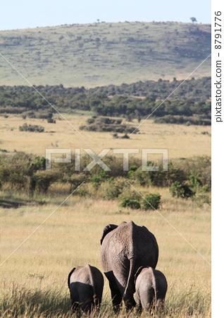 父母和小孩 大象 风景
