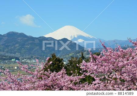 富士山 背景 清新-图库照片 [8814589] - pixta