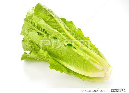 生菜 叶子 食物