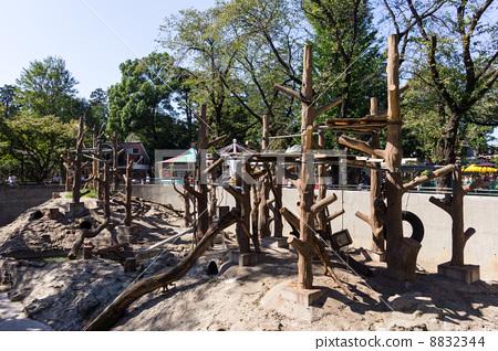 图库照片: 猴山 井之头动物园 景观