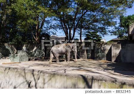 井之头动物园 动物