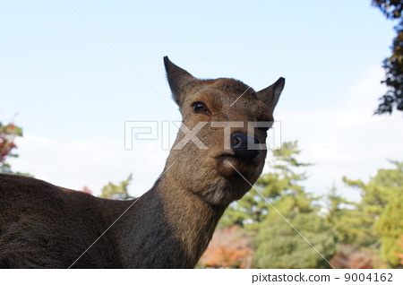 动物水墨画鹿一