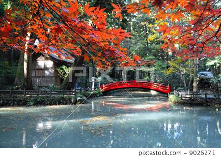风景名胜 秋叶 神社和庙宇