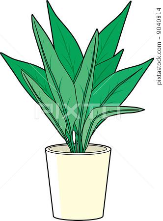 灌装的 室内盆栽 观叶植物