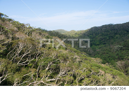 图库照片: 广阔的荒野 森林 树林