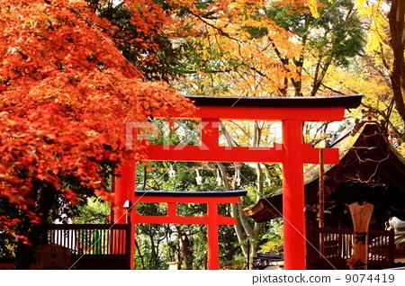 鸟居 风景 日本风格