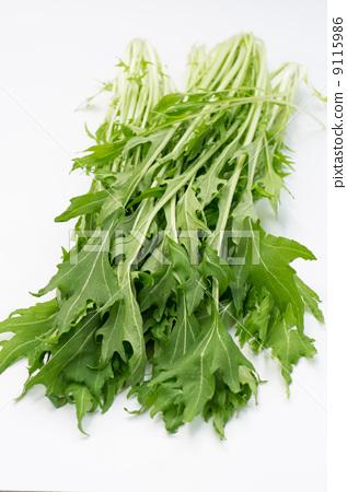 图库照片: 日本芜菁 雪里红 叶菜类图片