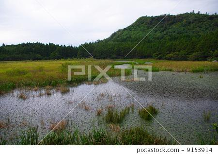 图库照片: 岛根县 沼泽 湿地