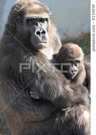 父母和小孩 母亲 动物