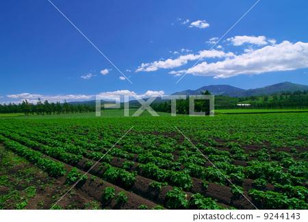 首页 照片 风景_自然 大地 原野 原野 田地 领域  *pixta限定素材仅在
