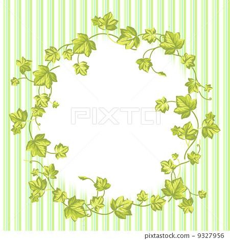 框架 常春藤 植物