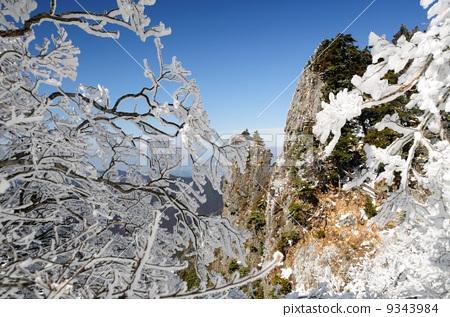 季节 冬 照片 冬天 冬 覆有霜的树 首页 照片 风景_自然 季节 冬 冬天