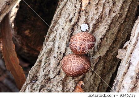 蘑菇 菌类 森林