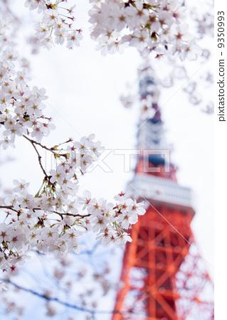樱花 东京铁塔 樱桃树