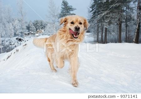 动物 犬科的 背景-图库照片