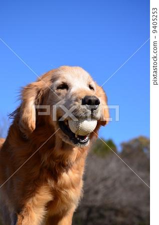 狗 老年人 可爱
