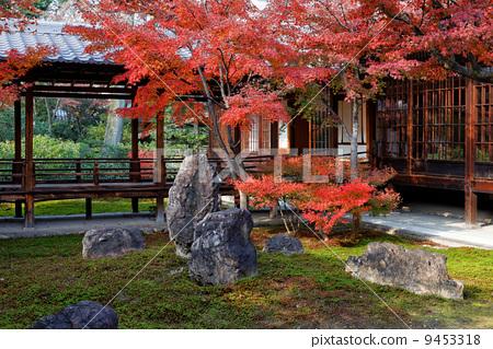 图库照片: 花园 秋叶 院子