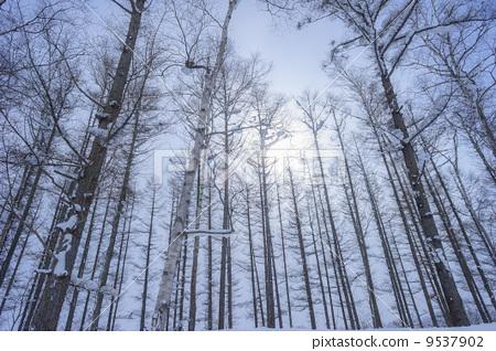 伐木场 树