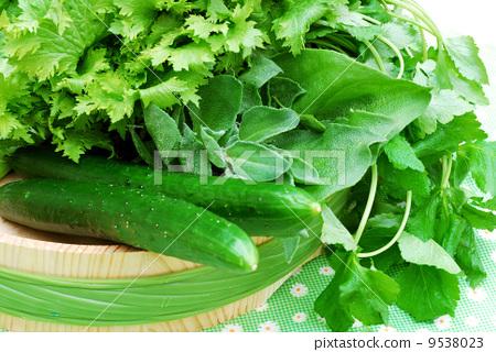 图库照片: 蔬菜 黄瓜 叶菜类图片