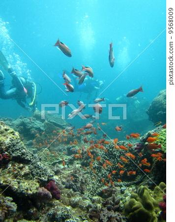 图库照片: 热带鱼 海底的 海里