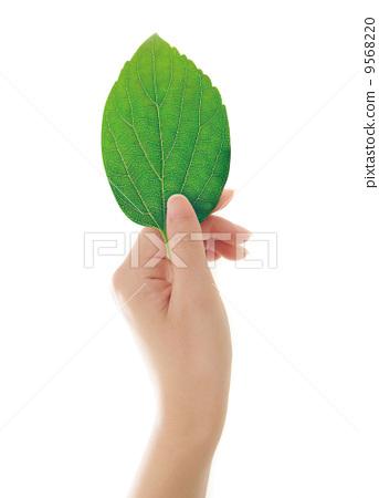 树叶 叶子 手图片