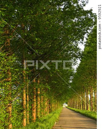 最美很长路树风景