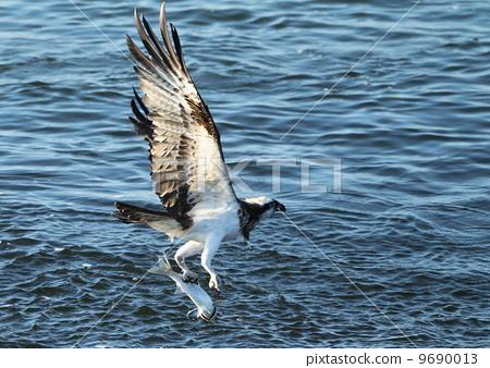 鹰的翅膀手绘