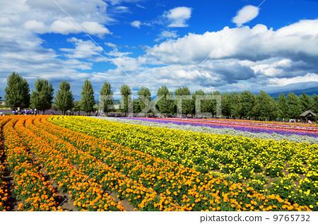 照片素材(图片): 花园 田园 田园风景