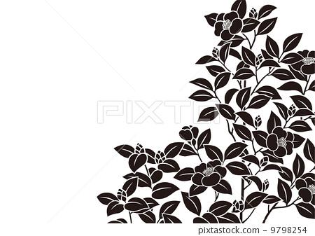 图库插图: 矢量 山茶花 日本山茶