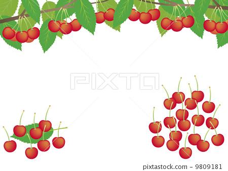 樱桃 隔离的 白色背景
