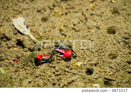 图库照片: 螃蟹 蟹 甲壳动物