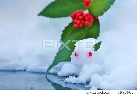照片 山兔 白兔子 草珊瑚 首页 照片 姿势_表情_动作 表情 可爱 山兔